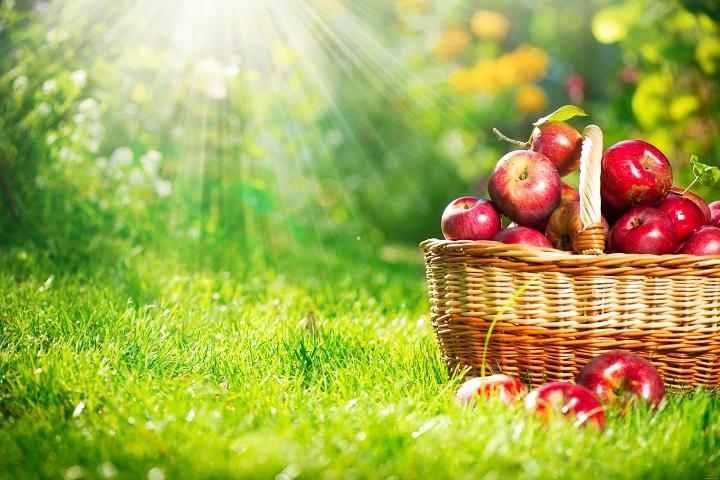 şeker hastalığına iyi gelen meyveler elma